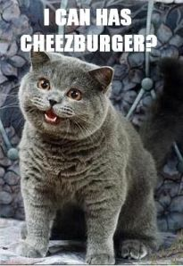 i_can_has_cheezburger_1_